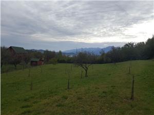 Teren de vanzare in Tocile 3500 mp