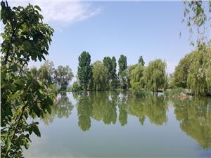 Lac populat cu pesti la Miercurea Sibiului
